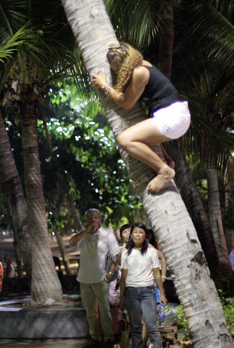 What on earth is she doing?! A lady ascends a tree late at night. Of course it could only be Pattaya!