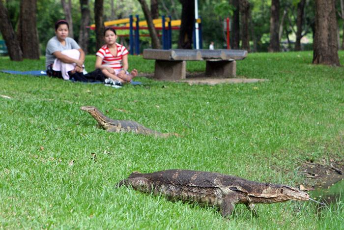 This shot doesn't really show you how large these monitor lizards in Lumpini Park were. I jut love the way the two Thai ladies at the top of the picture just sit there watching these half snake / half alligator beasts!