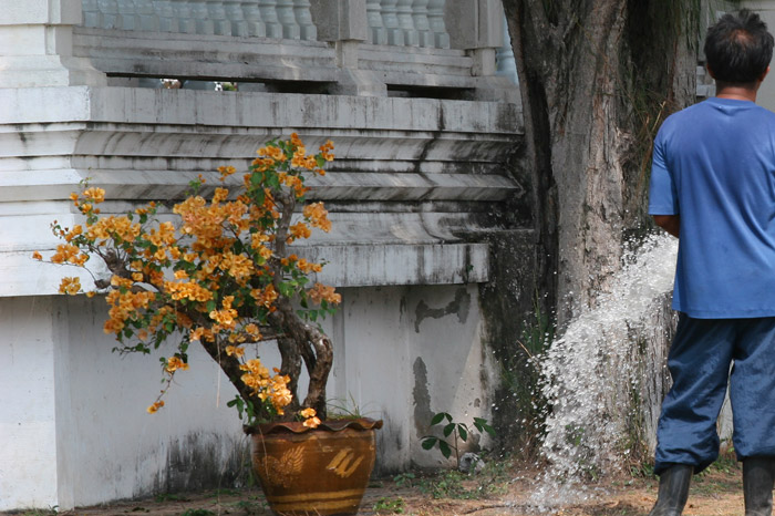 A gardener takes a leak outside a temple in Roi Et. He must have had a lot to drink!