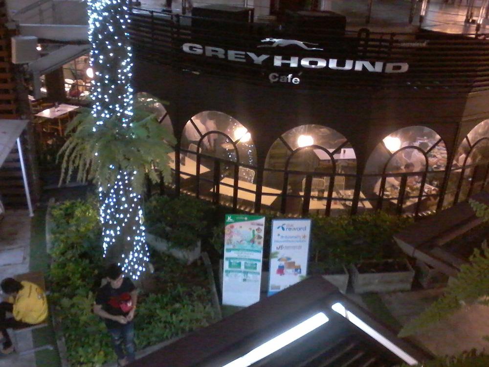 greyhound-ari