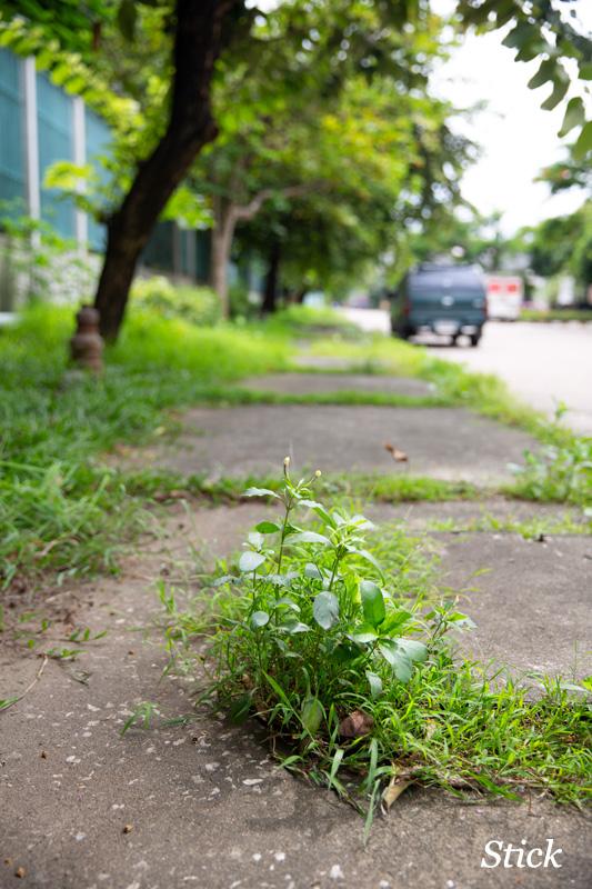 bangkok-park19