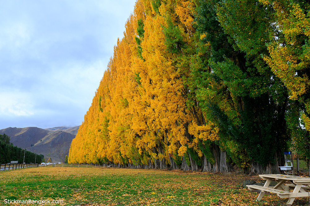 Cromwell, Otago, New Zealand